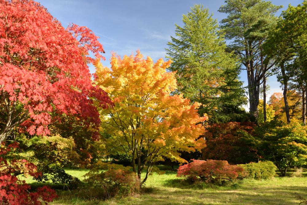 Vielfalt in Grün: Deutschlands Arboreten sind einen Besuch wert