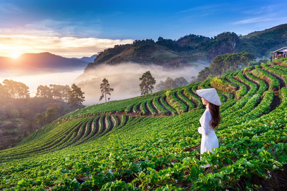 Die schönsten Highlights in Vietnam